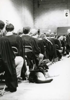 Convocation graduate accompanied by seeing-eye dog, Spring 1986