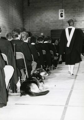 Convocation graduates in gymnasium, Spring 1986