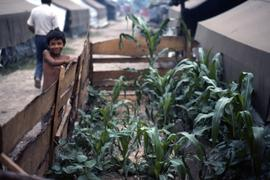 Tiny family garden featuring corn-this is unusual since almost all gardens were communal. Note th...